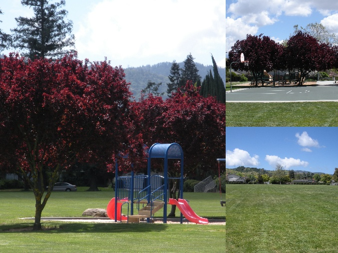Hoover Park Collage