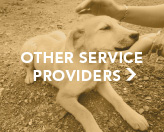 Other Service Providers